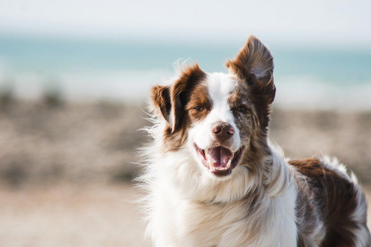 Assicurazione Veterinaria Cani